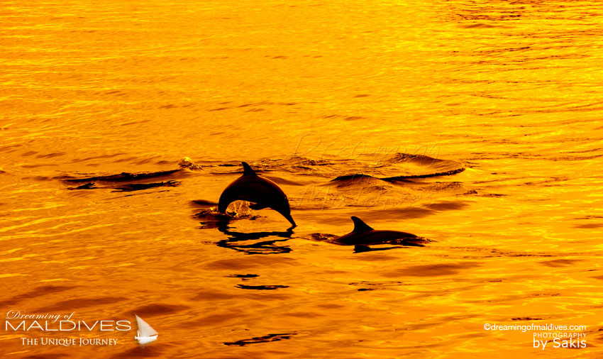 Baros Maldives group excursions Sunset Dolphin Watching