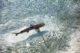 Observer les bébés requin apprendre à chasser en bord de rivage