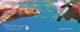 Partir à la recherche de tortues marines et nager avec elles