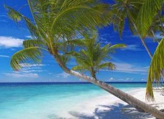 Cocotiers des Maldives sur une Ile déserte