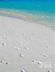 Laissons les plages des Maldives immaculées, une des règles essentielles à suivre...