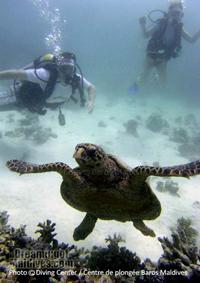 baptême de plongée aux Maldives. Atoll de Male Nord
