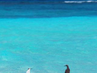 Les Maldives destination romantique