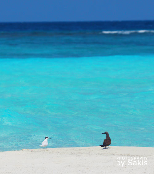 Photo du Jour : Romance aux Maldives