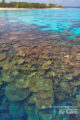 snorkeling aux Maldives, Plongee Palme-Masque-Tuba sur de sublimes Plateaux de Corail
