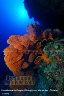 Plongée Filitheyo Maldives