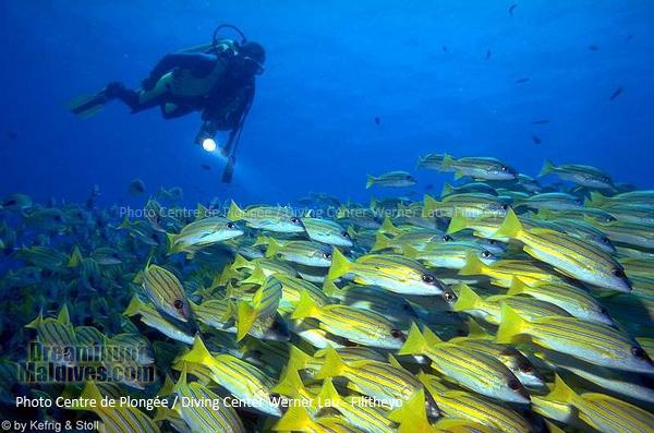 L'Atoll de Faafu foisonne de Bancs de Poissons | Plongée Filitheyo