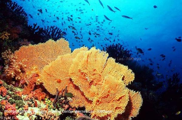 Grande formation de corail de l'Atoll de Faafu | Plongée Filitheyo
