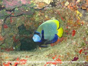 Poissons de récifs. Plongée dans l'Atoll de Noonu. Maldives - Hilton Maldives Iru Fushi