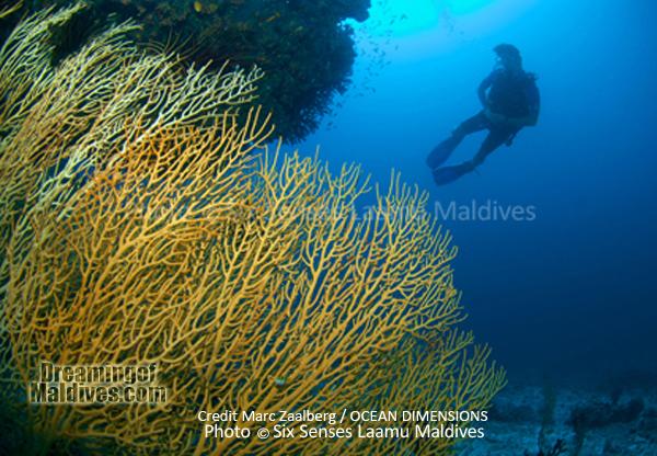 Magnifique formation de corail - Plongée au Six Senses Laamu – Atoll de Laamu