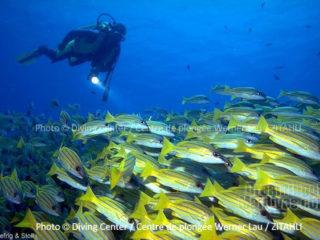 Plongée dans l'Atoll de Noonu au Zitahli Kuda-Funafaru
