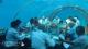 Réunion d'affaires sous la mer au restaurant 5.8. Photo Hurawalhi Maldives