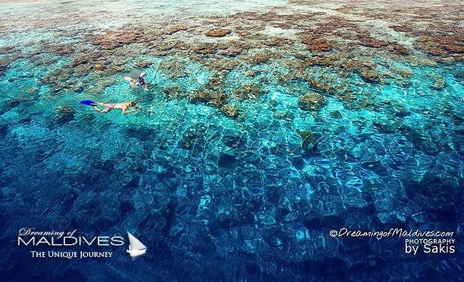 Faire du Snorkeling aux Maldives...Bienvenue au Paradis Sous-Marin