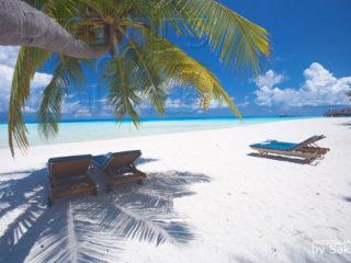 Maldives, sur la plage a l'ombre d'un cocotier