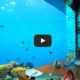 Restaurant sous marin at Anantara Kihavah Maldives in Video