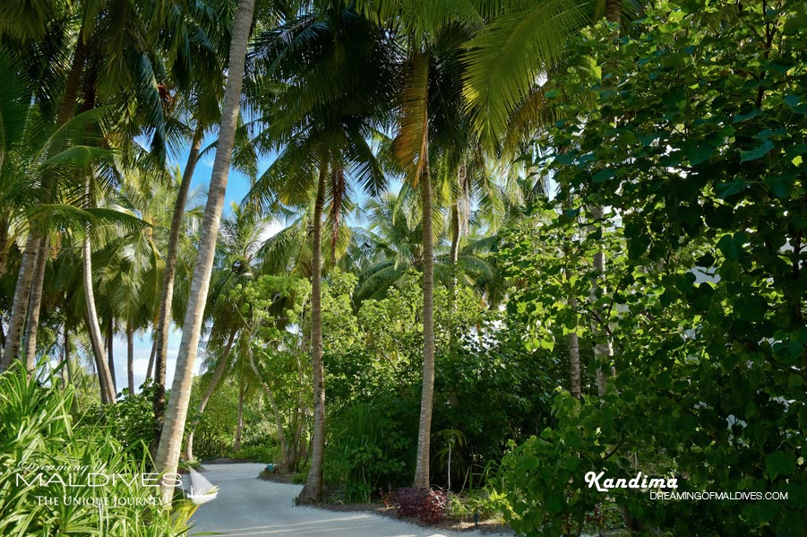 Kandima Maldives Island Vegetation & Sandy Paths