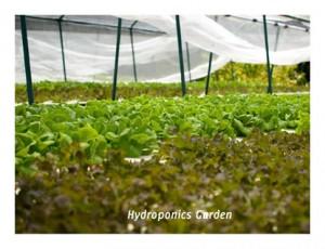 Organic Garden at Kuramathi