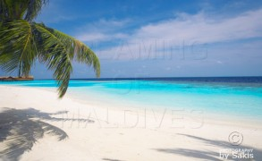 Discover Lily Beach Resort & Spa Maldives in 35 Beautiful Photos