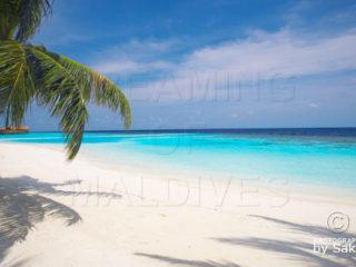 Lily Beach Resort & Spa Maldives | Photo Gallery