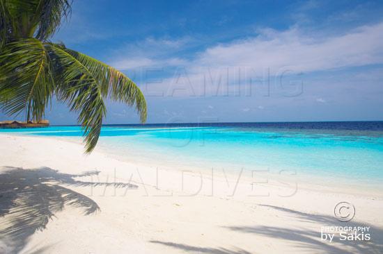 Lily Beach Maldives - The Beach