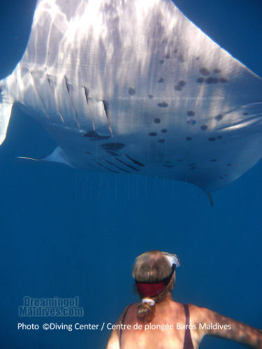 Manta-3 (Diving and Snorkeling at Baros Maldives, North Male Atoll. Interview with Karin and Ronny, Diving Center Managers)