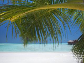 Anantara Dhigu Maldives October's Dreamy Resort