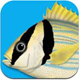 App Marine Fishes - Identification Guide for tropical fishes