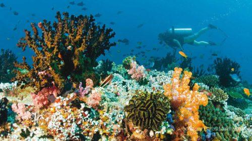 bar2 (See Beneath Maldives Resorts. A Diving & Snorkeling New Experience)