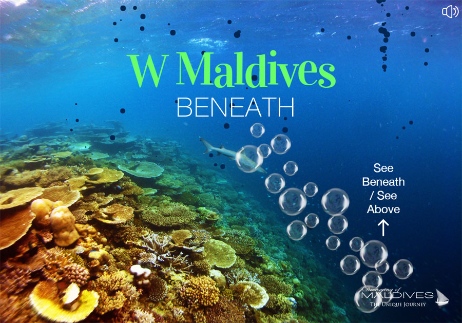 Diving W Maldives Come and See Beneath Paradise