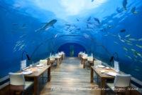 Conrad Maldives Rangali Island's underwater restaurant rated as Most Beautiful Restaurant in the World