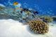 Underwater world at Baros Maldives