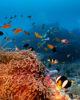 Corals Formation Amilla Fushi Maldives