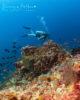 Diving at Amilla Maldives