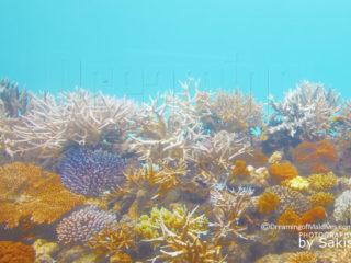 Coral garden at Huvafen Fushi Maldives. Coral reef Protection