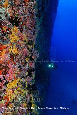Coral Walls Faafu Atoll Diving in Faafu Atoll