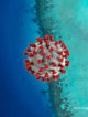coronavirus maldives