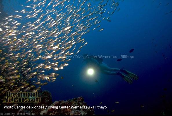 Magical Fish encounter - Filitheyo Island Resort