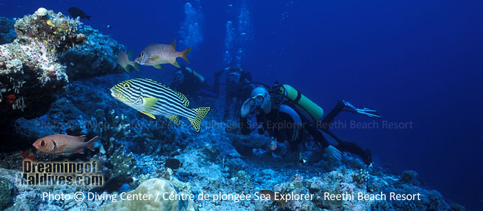 Diving in Baa Atoll - Reethi Beach Resort