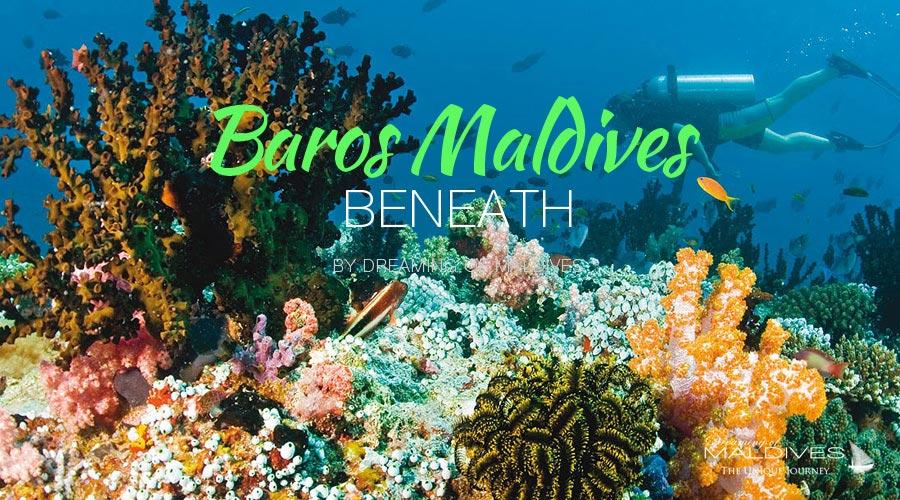 see beneath maldives snorkeling diving at Baros Maldives Underwater