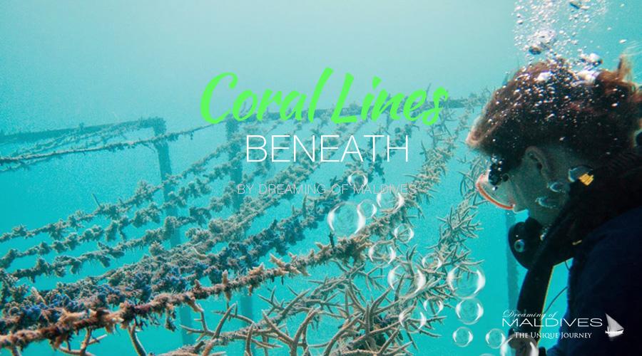 diving snorkeling at Gili Lankanfushi Maldives Coral Project