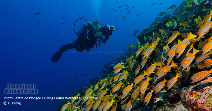 Diving in Faafu atoll from Filitheyo Island Resort