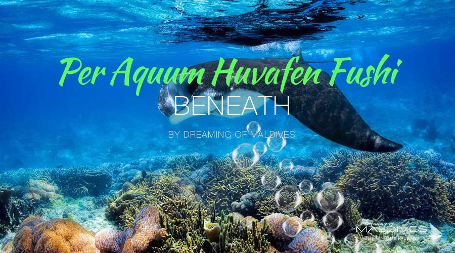 see beneath maldives snorkeling diving at Per Aquum Huvafen Fushi Maldives Underwater