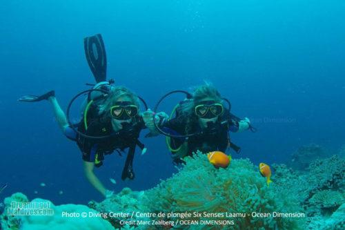 Diving and Snorkeling at Six Senses Laamu, Laamu A...