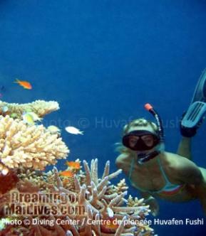 North Male Atoll- Snorkeling