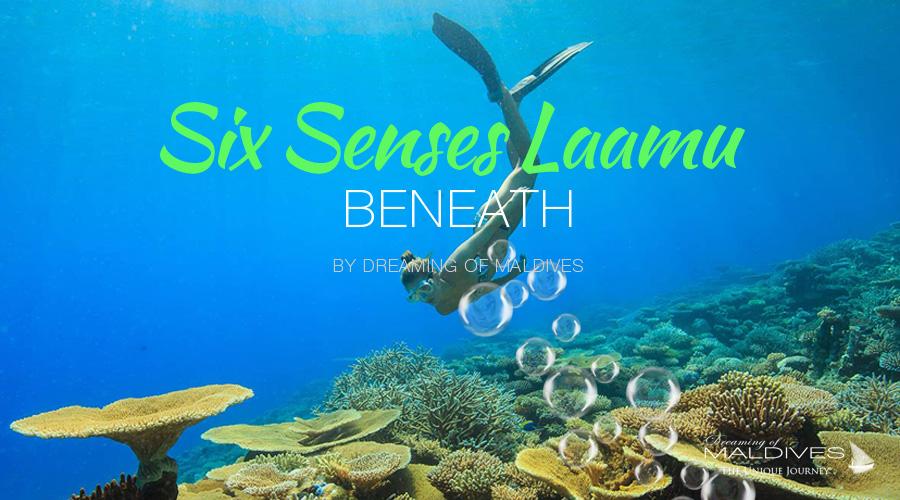 see beneath maldives snorkeling diving at Six Senses Laamu Maldives Underwater