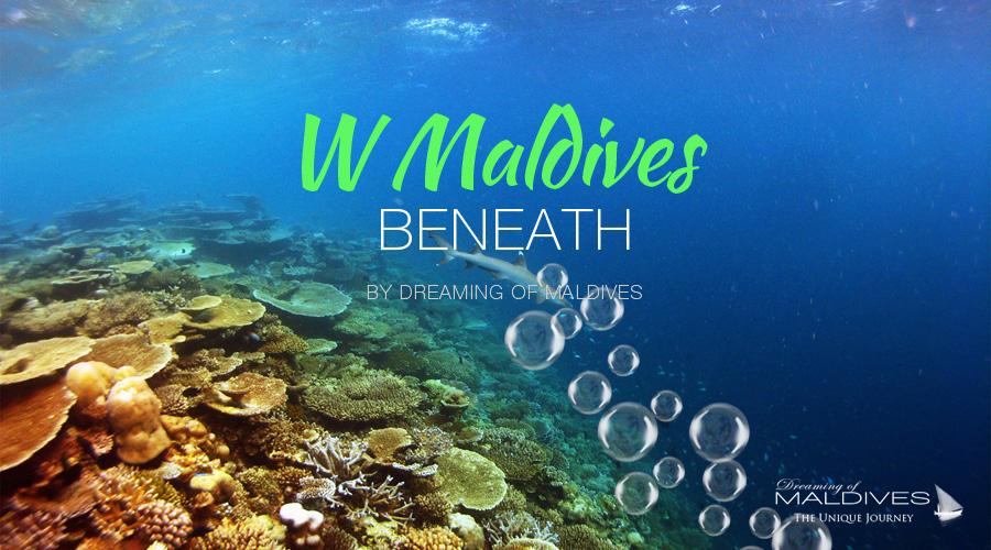 see beneath maldives snorkeling diving at W Maldives Underwater