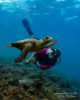 diving at amilla with a turtle