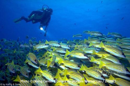 Diving at Zitahli Kuda-Funafaru. Noonu Atoll. Werner Lau Dive Center