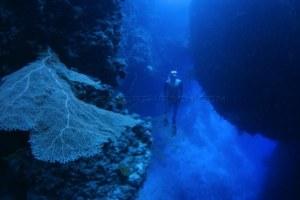 Deepest Man on Earth' Herbert Nitsch freediving record holder gives classes at Soneva Fushi
