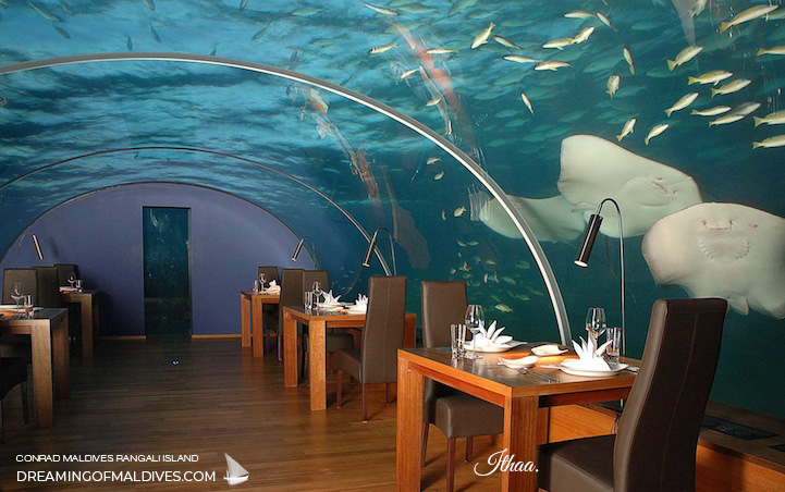Say Hello to The Rays at ITHAA underwater restaurant maldives conrad